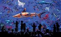 spread final shark no scuba.jpg