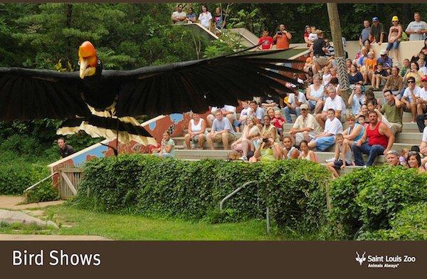 Rendering_Bird Shows_Saint Louis Zoo.jpg