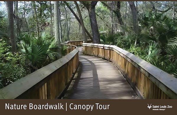 Rendering_Nature Boardwalk Canopy Tour_Saint Louis Zoo.jpg