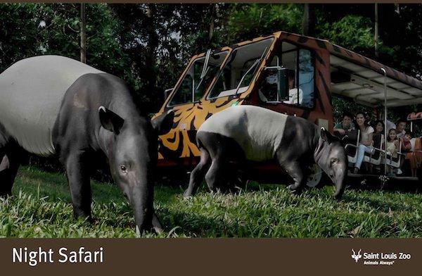 Rendering_Night Safari_Saint Louis Zoo.jpg