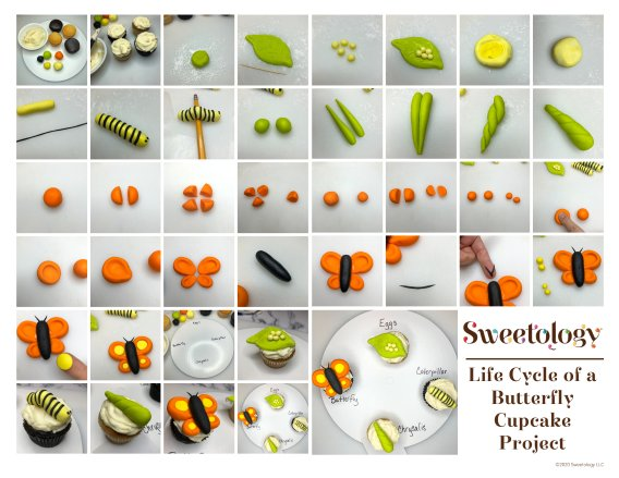 Life Cycle Butterfly Kit1.png