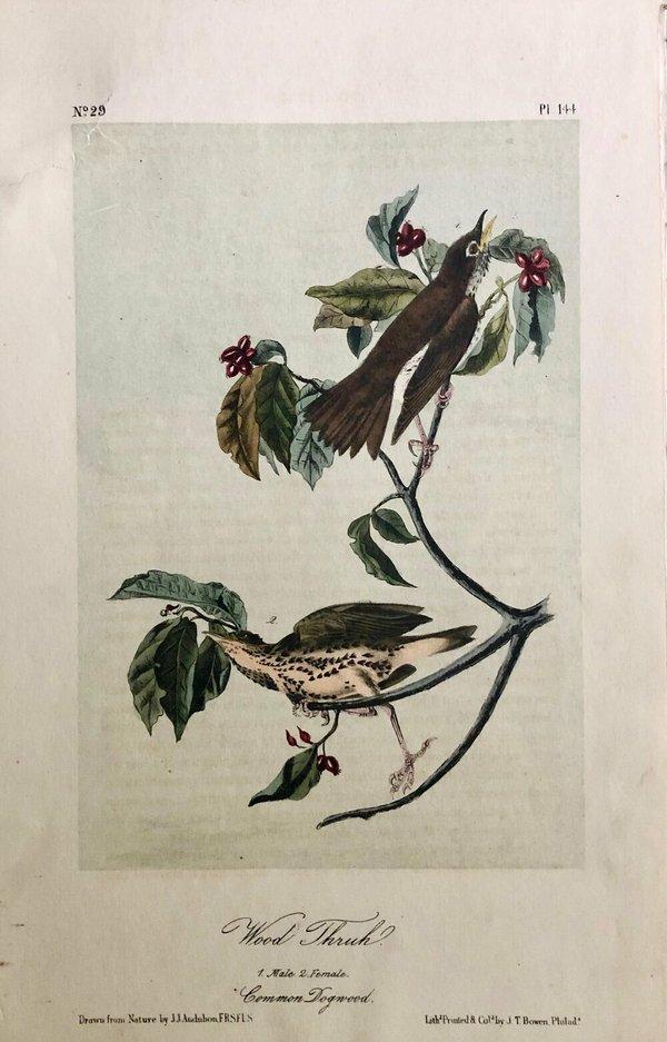J.J.+Audubon-Wood+Thrush-Plate+144.jpeg