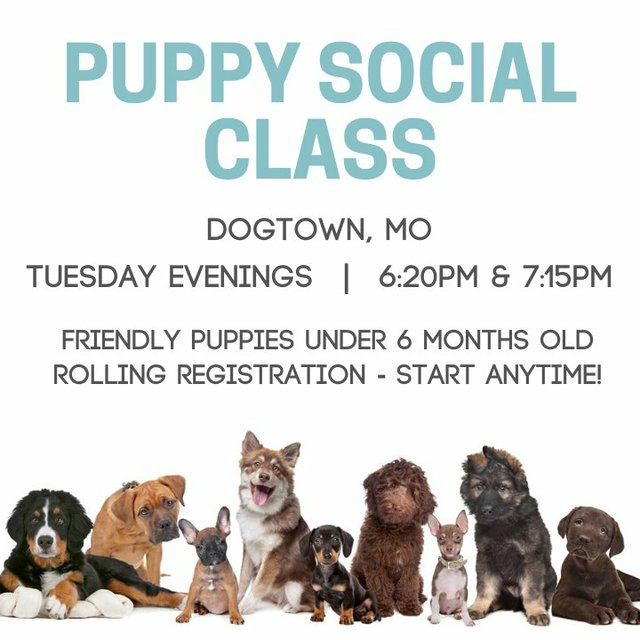 puppy social graphic stlmag.jpeg