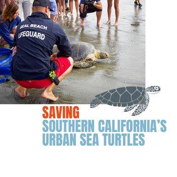 FI-Sea-Turtles-2.png