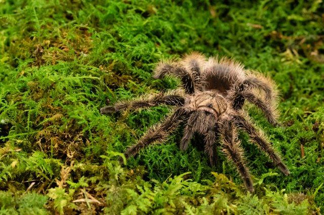 BH_Spider Margaret_Schmidt 0056.jpg
