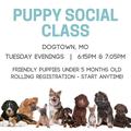 puppy social stlmag.png